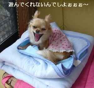 blog2009052705.jpg