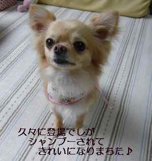 blog2009052901.jpg