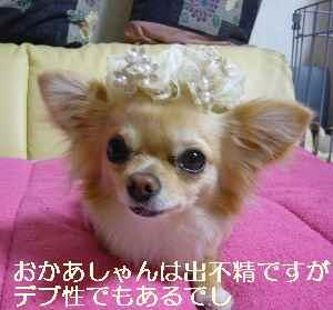 blog20090601.jpg