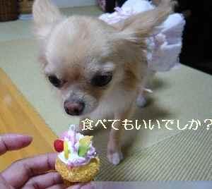 blog2009060404.jpg