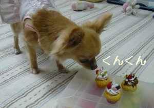 blog2009060405.jpg