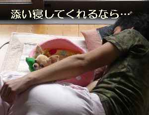 blog2009060701.jpg