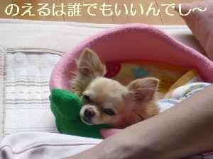 blog2009060702.jpg
