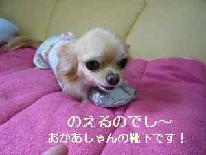 blog2009060801.jpg
