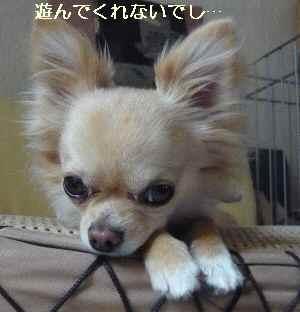 blog2009060901.jpg