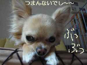 blog2009060902.jpg