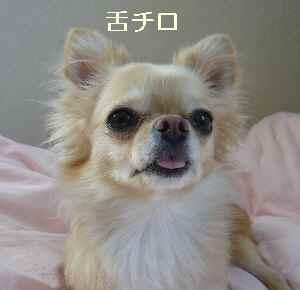 blog2009061201.jpg