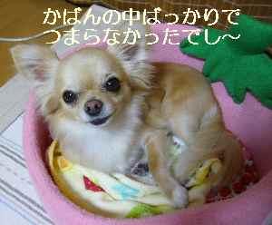 blog2009061403.jpg
