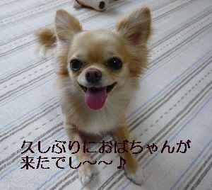 blog2009061504.jpg