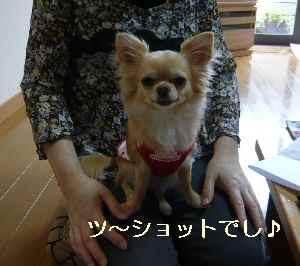 blog2009061506.jpg