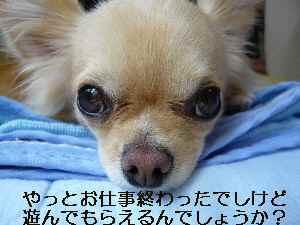 blog2009061801.jpg