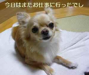 blog2009061901.jpg