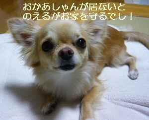 blog2009061903.jpg