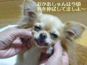blog2009061905.jpg