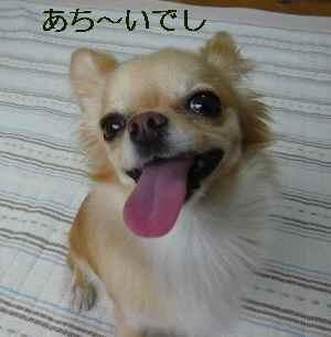 blog2009062201.jpg