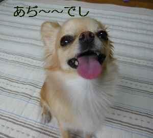 blog2009062202.jpg
