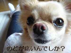 blog2009062601.jpg