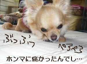 blog2009070204.jpg