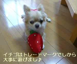blog2009070602.jpg