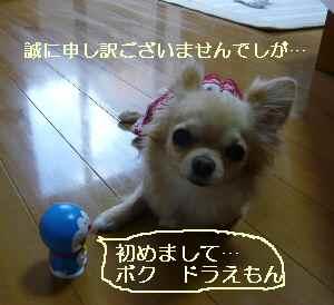 blog2009070603.jpg