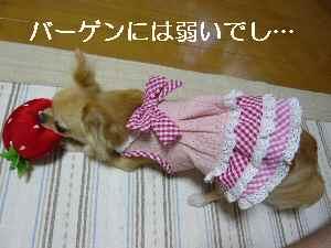 blog2009071005.jpg