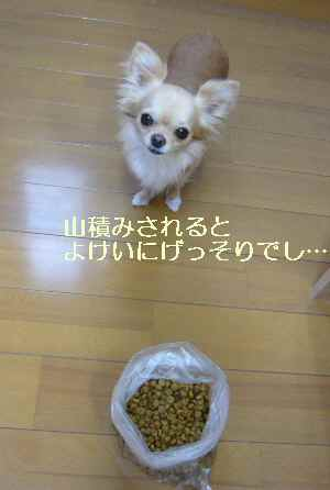 blog2009071102.jpg