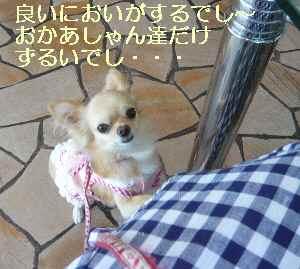 blog2009071204.jpg