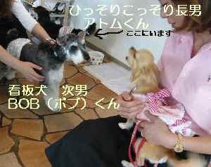 blog2009071205.jpg