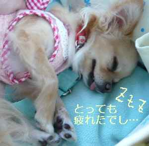 blog2009071208.jpg