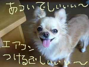 blog2009071306.jpg