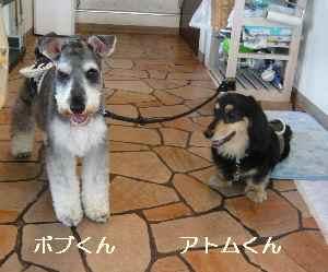 blog2009071801.jpg