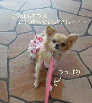 blog2009071802.jpg