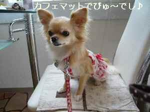 blog2009071804.jpg