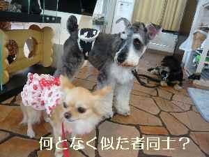 blog2009071805.jpg