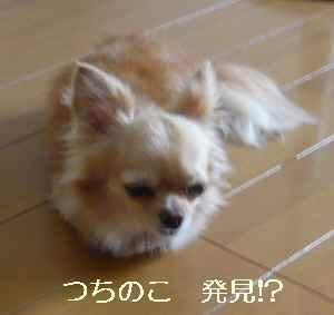 blog2009072001.jpg