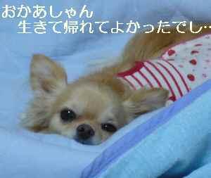 blog20090721.jpg