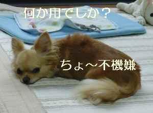 blog2009072204.jpg