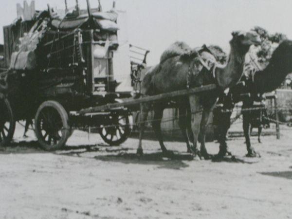 ラクダ荷車0716
