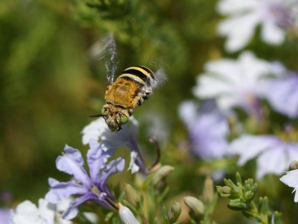 1222花蜂飛翔斜前