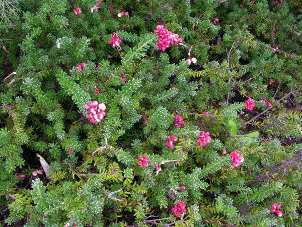 植物園花2