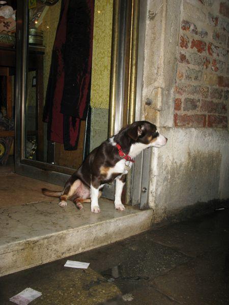 犬ヴェネチア戸口