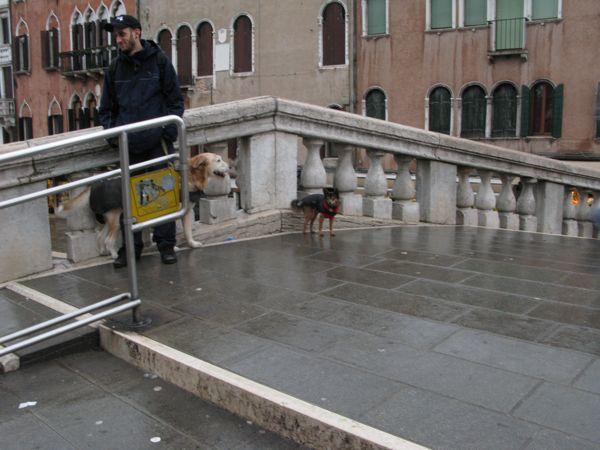 犬二匹ヴェネチア橋