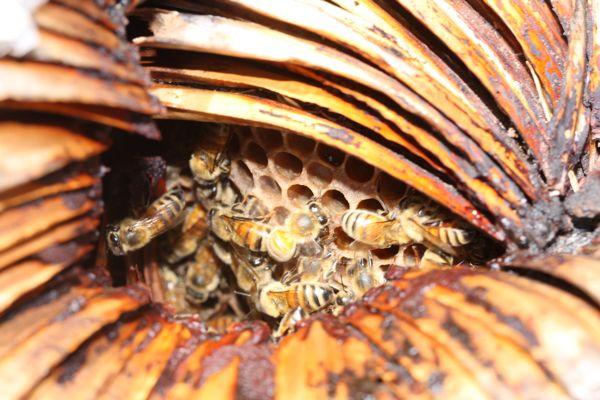 0308蜂巣