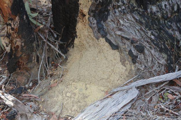 0606白蟻巣