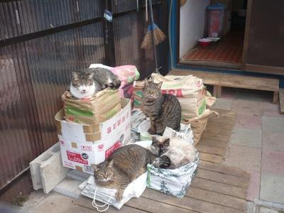 猫舎新聞紙