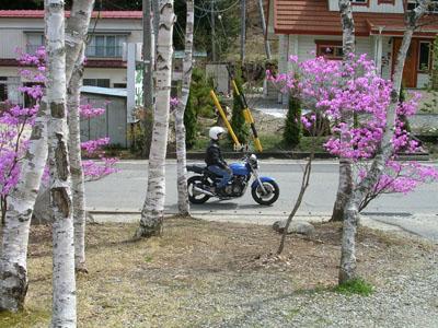 080419光前寺のしだれ桜 036