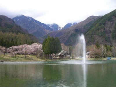 080419光前寺のしだれ桜 036 (2)