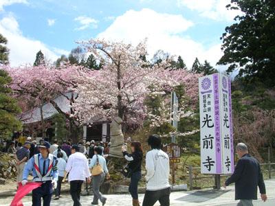 080419光前寺のしだれ桜 036 (11)