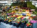 ヘートリエットの花屋さん