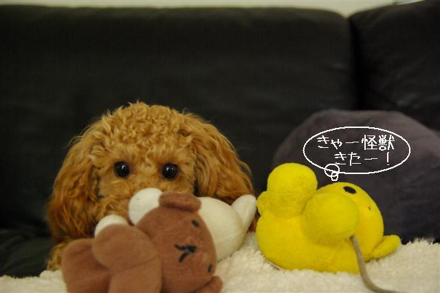 2008.1.9ウサ子 032 (Small)